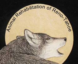 animalrehabilitation