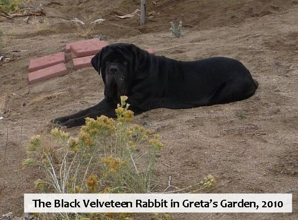 The Black Velveteen Rabbit in Greta's Garden, 2010