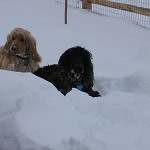 Monty and Wats in snow
