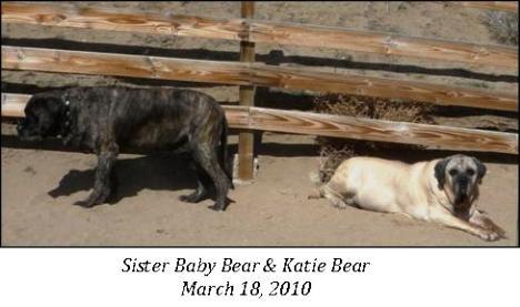 Katie Bear