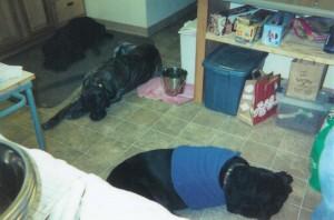 Bubba, Kona & Baroness
