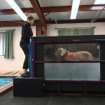 Therapeutic exercise & gait training in the underwater treadmill w/varied water height.