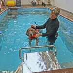 Working in the pool against the current for strengthening, balance.