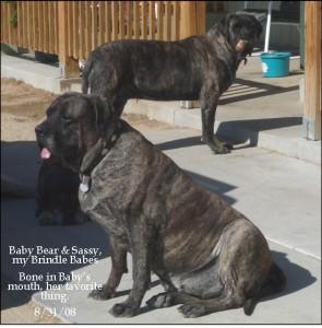 Baby Bear & Sassy