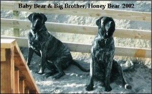 Baby Bear & Honey Bear