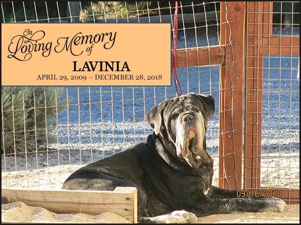 Lavinia - April 29, 2009 – December 28, 2018